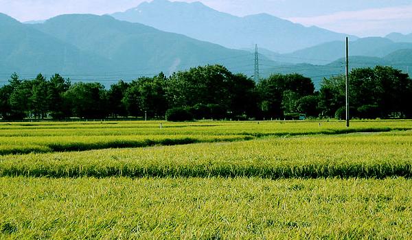 TPPの裏事情と農業問題